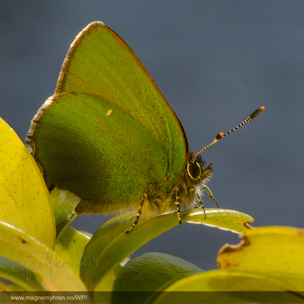 Gulgrønne farger som står mot en nesten utgrået bakgrunn