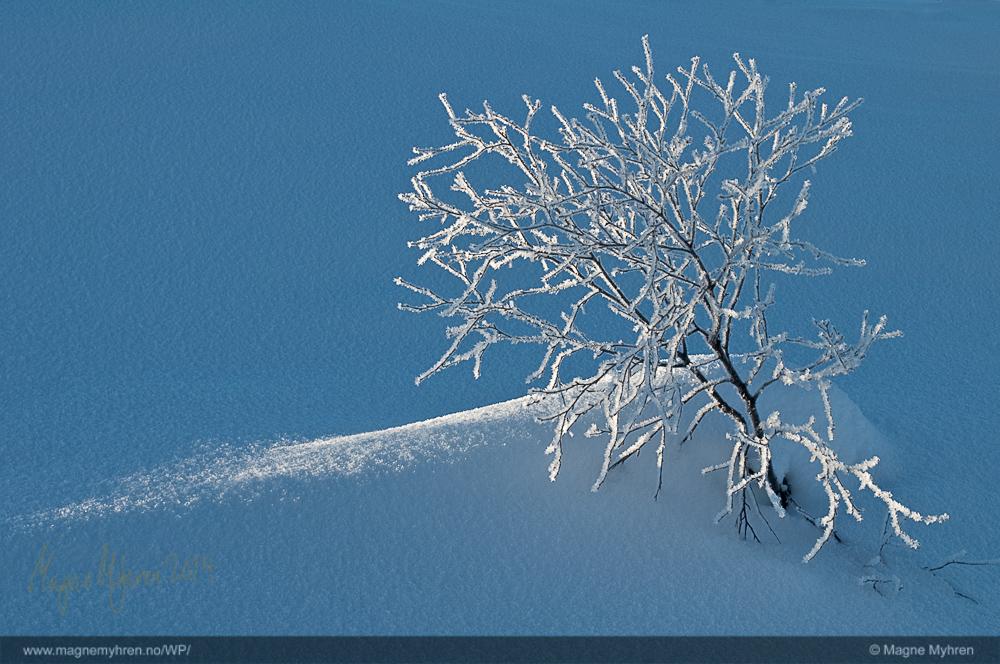 magne -myhren -frost