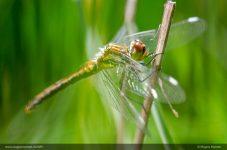 Insektsommer-115