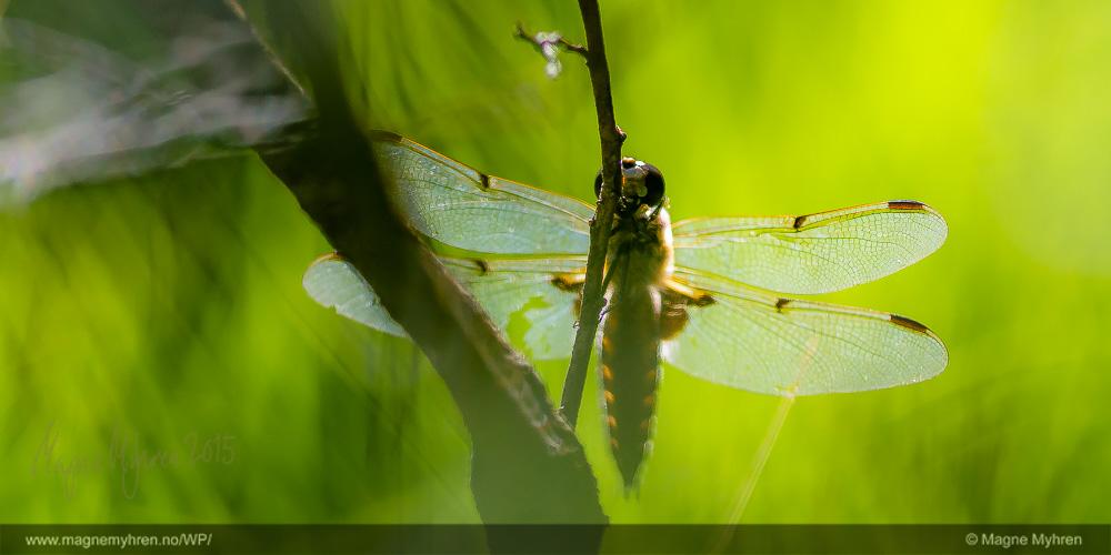 Insektsommer-178