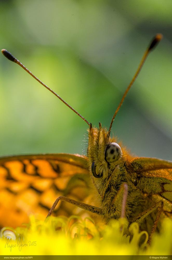 Insektsommer-62-2