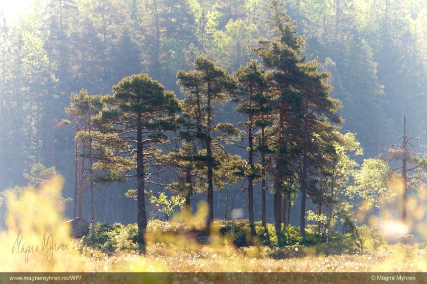 Morgen i skogen 2