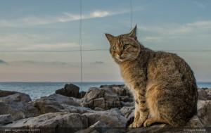 katt-gyldne-snitt-linjer