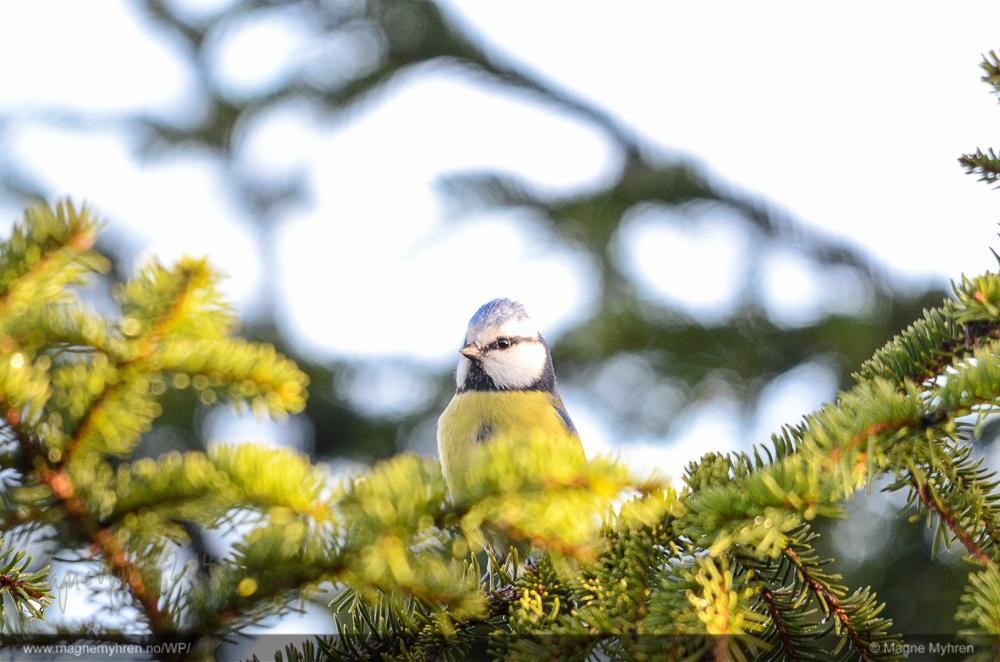 Spenningen oppnås her ved å bruke froskeperspektiv. Det gjør fuglen kraftfull og majestetisk. Symmetrien skaper en forsterkning av denne følelsen.