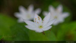 Div blomster-56