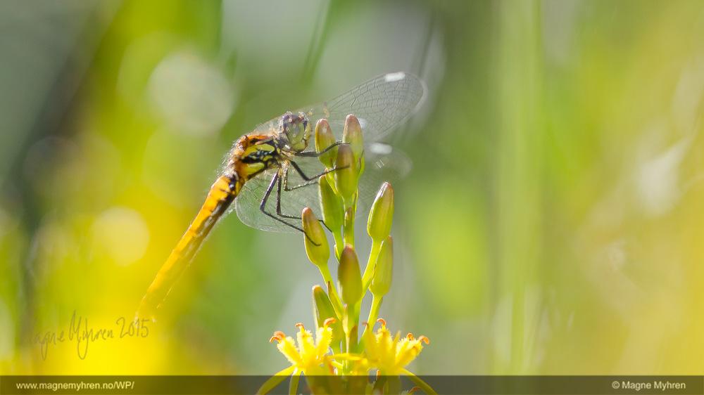 Insektsommer-175